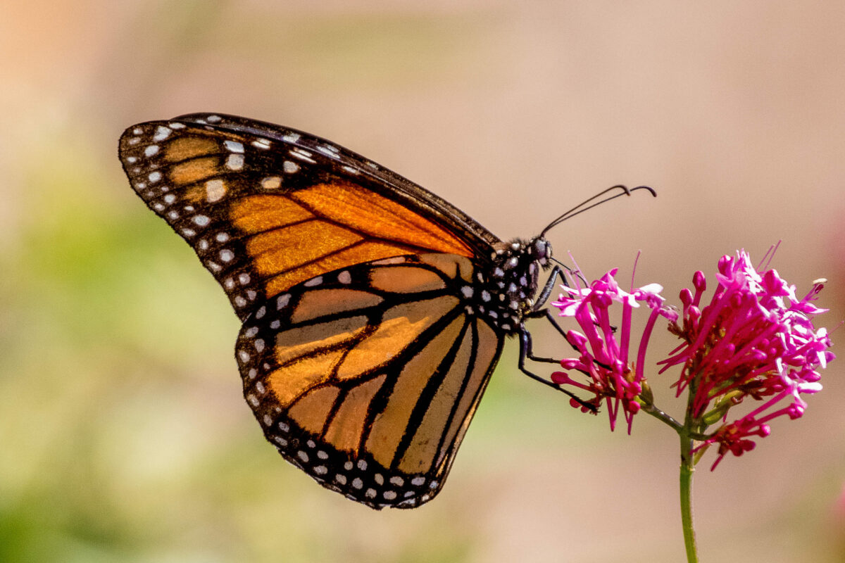 Our Wild Side: Petals & Wings