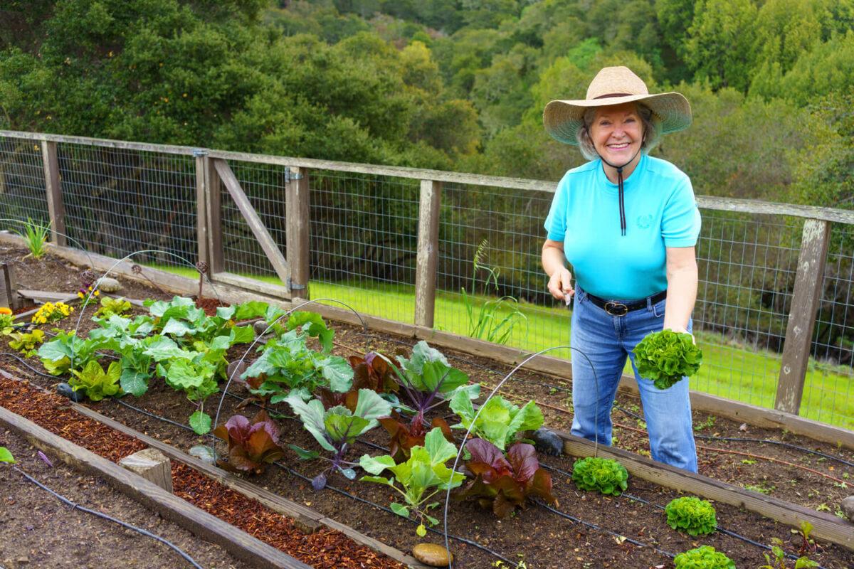 Homegrown Harvest