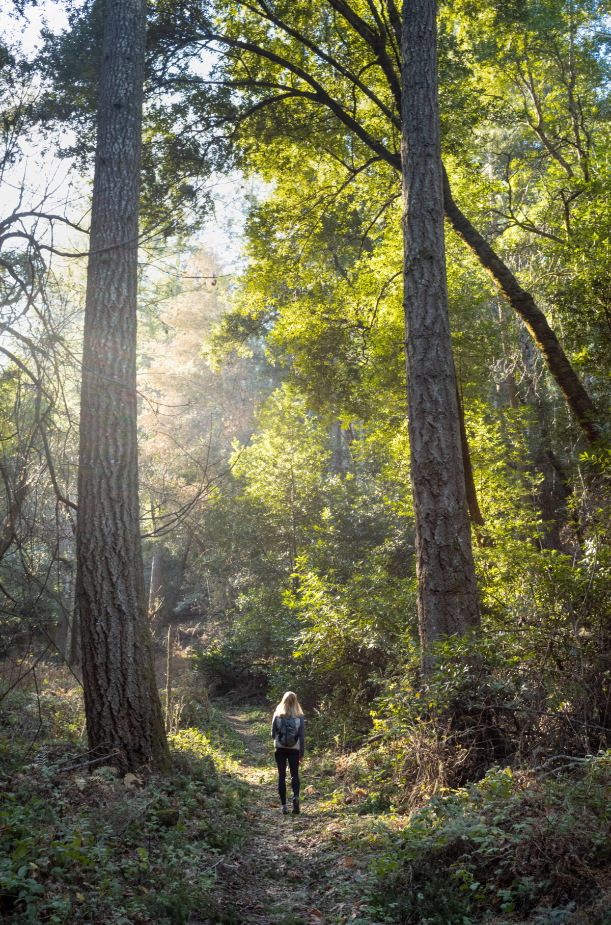 Sam McDonald's Redwood Sanctuary