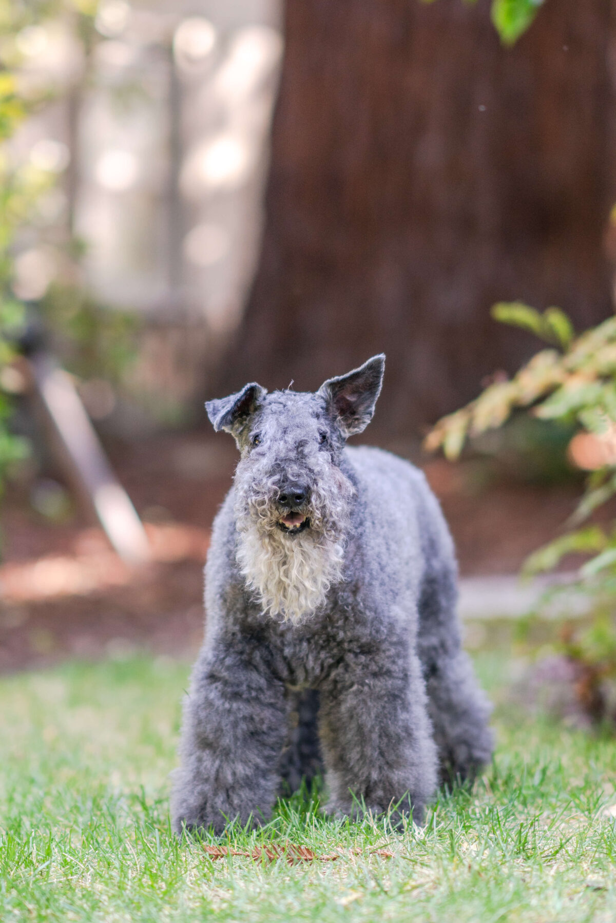 Diary of a Dog: Nellie