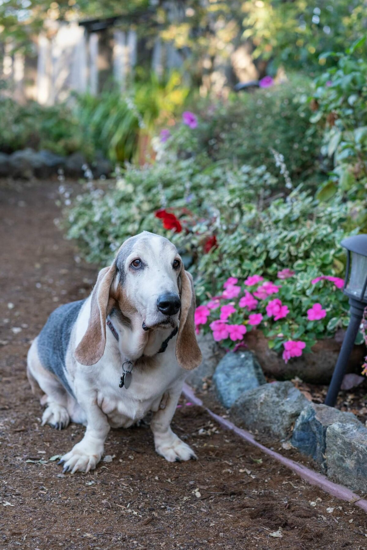 Diary of a Dog: Norman
